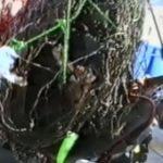 Orličtí vrazi, místa shozů sudů