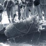 Orličtí vrazi, nález pletiva s tělem, první zavražděný, Orlická přehrada
