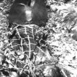 Neobjasněný děsivý případ Dita a Kamila, před setkáním s vrahem, Koh-i-noor
